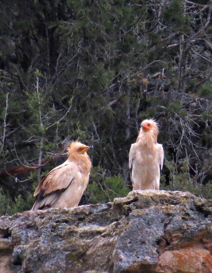 Ornitología - Más que monte